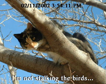 Frigga stalking birds in tree